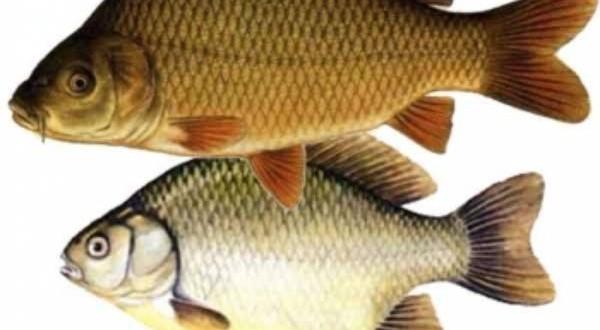 Duminicala romaneasca: Pescar sef